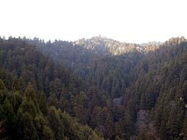 音水水源の森