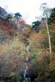 護摩壇山自然の森