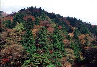 芦津水辺の森