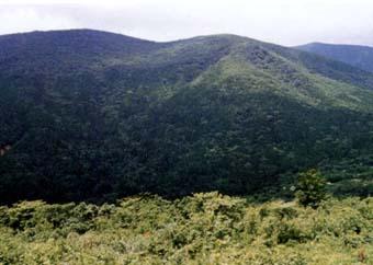 比婆山水源の森