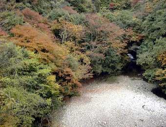 水源の森 木谷山