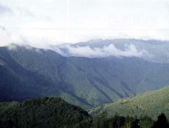 大滝山方水源の森
