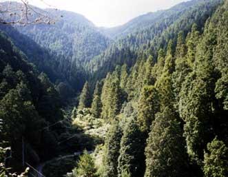 今治越智地方水源の森