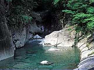 面河水源の森