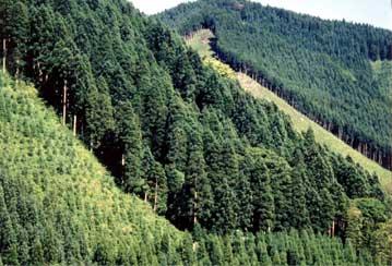 滝のある水源の森
