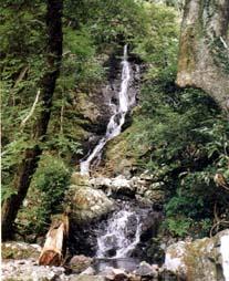 福智山水源林