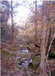 多良岳水源の森