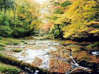 菊池渓谷自然休養林