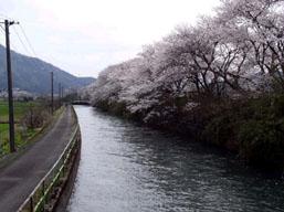 九頭竜川下流