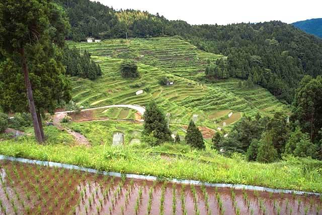 樫原の棚田村